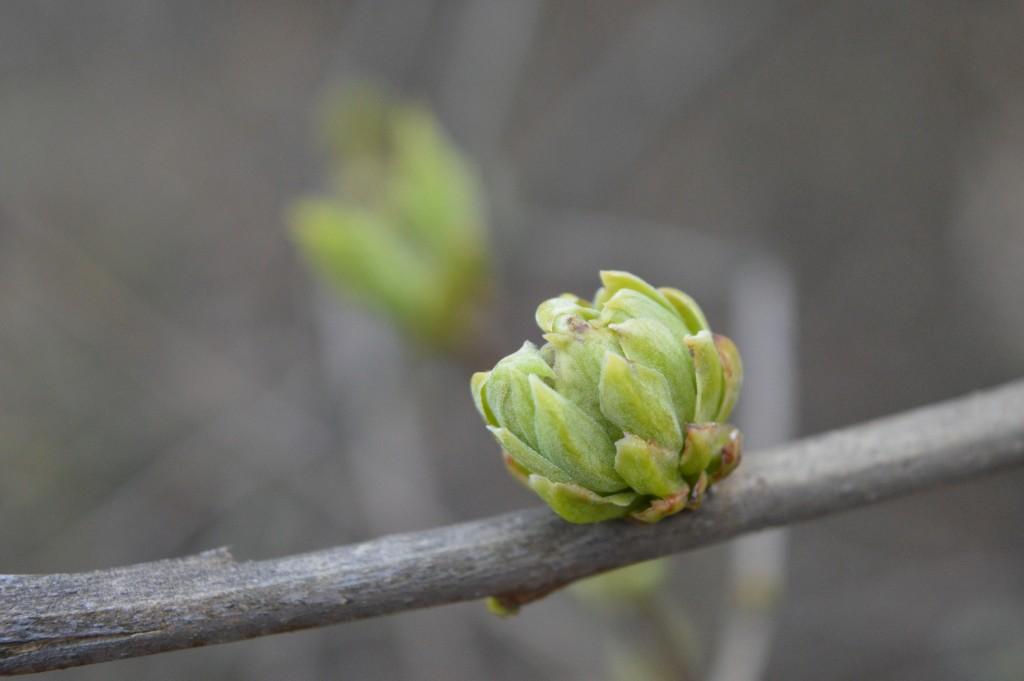 Thema Früchte des frühen Frühlings III - Umsetzung Melina Borcak und Regina Stötzel